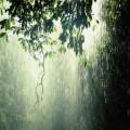 Kerala monsoon travel