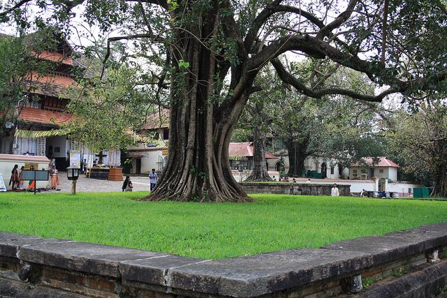 banyan-tree-vadakkunnathan-temple
