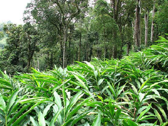 Spice garden kumily kerala
