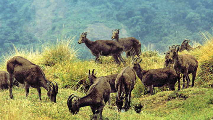 indias largest national parks tourism essay One of the most diverse national parks of india, kaziranga national park is a  home to the  what attract the tourists to explore this national park are the  common.
