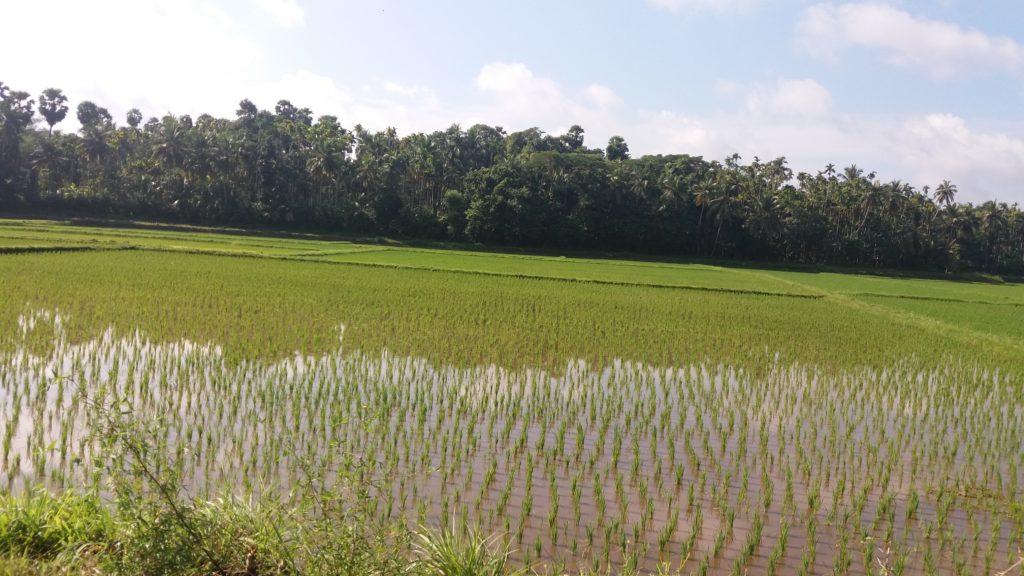 Scenic Thirumittacode landscape