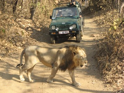 gir-wildlife-sanctuary